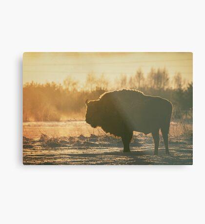 Bison Silhouette Metal Print