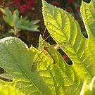 Incognito Mosquito  by abbycadabra