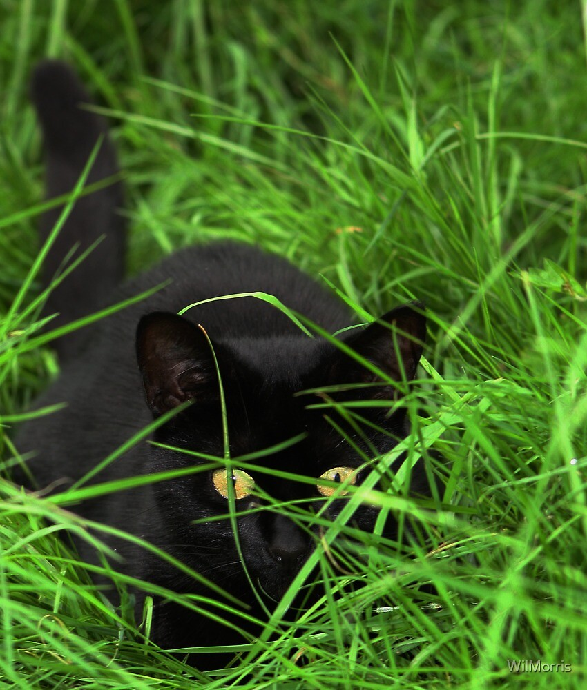 Cat In The Grass by WilMorris