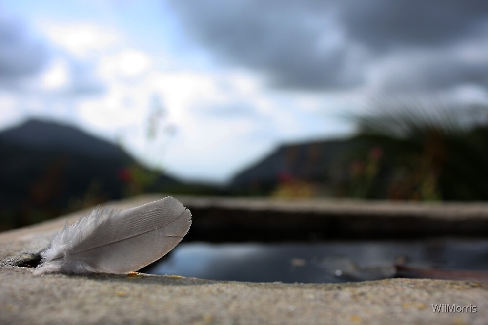 Feather By The Pool by WilMorris