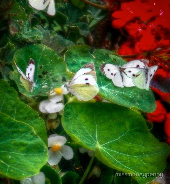 A flurry of large white butterflies by missmoneypenny
