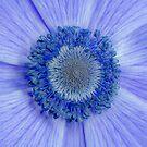 Pretty Blue by peaky40