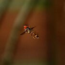 Dragonfly by WilMorris