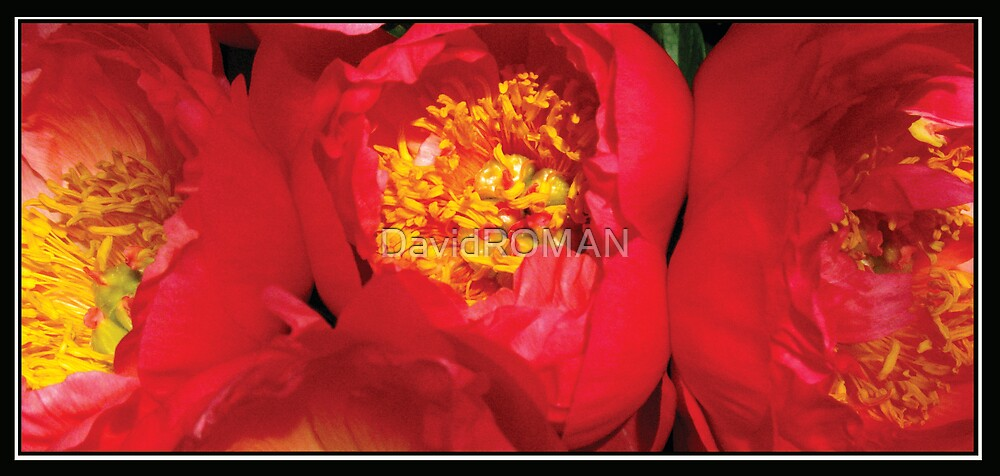 Three Red Ladies by DavidROMAN
