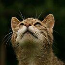 Wild Cat by Ann Heffron