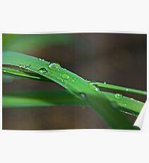 A Blade of Grass Poster