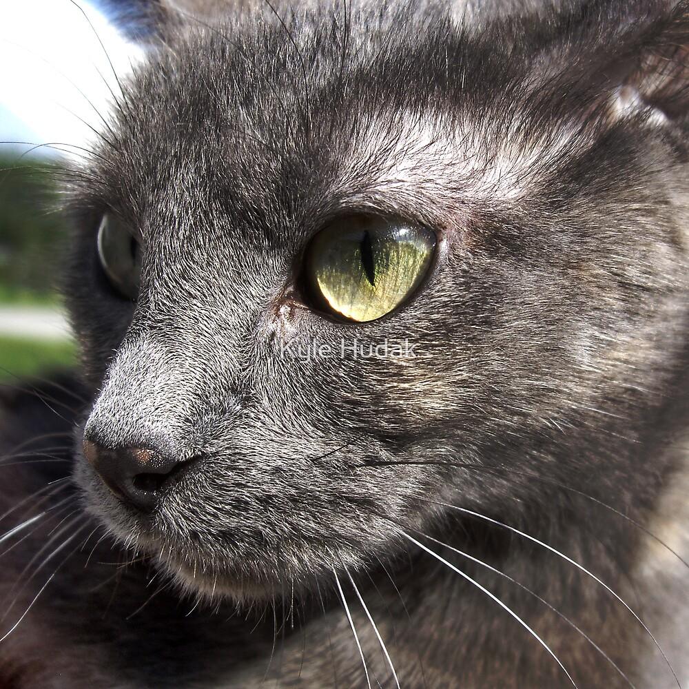 Portrait of a Cat by Kyle Hudak