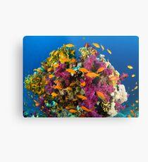 Coral Reef Metal Print