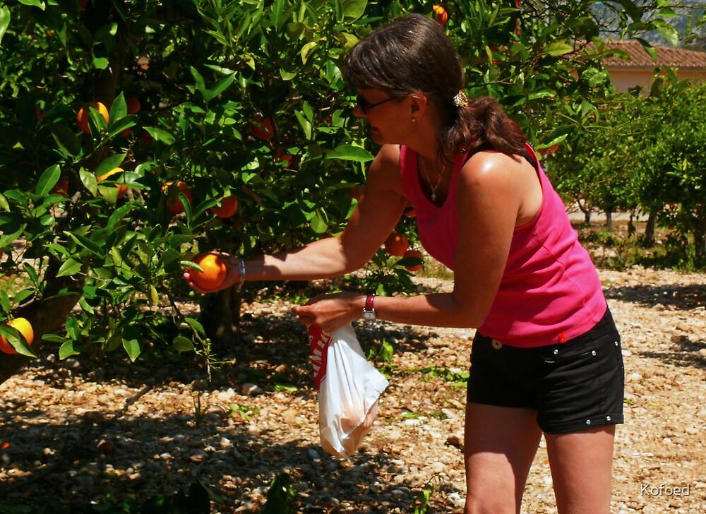 Picking Oranges by Kofoed