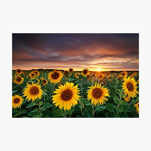 Here comes the Summer Photographic Print