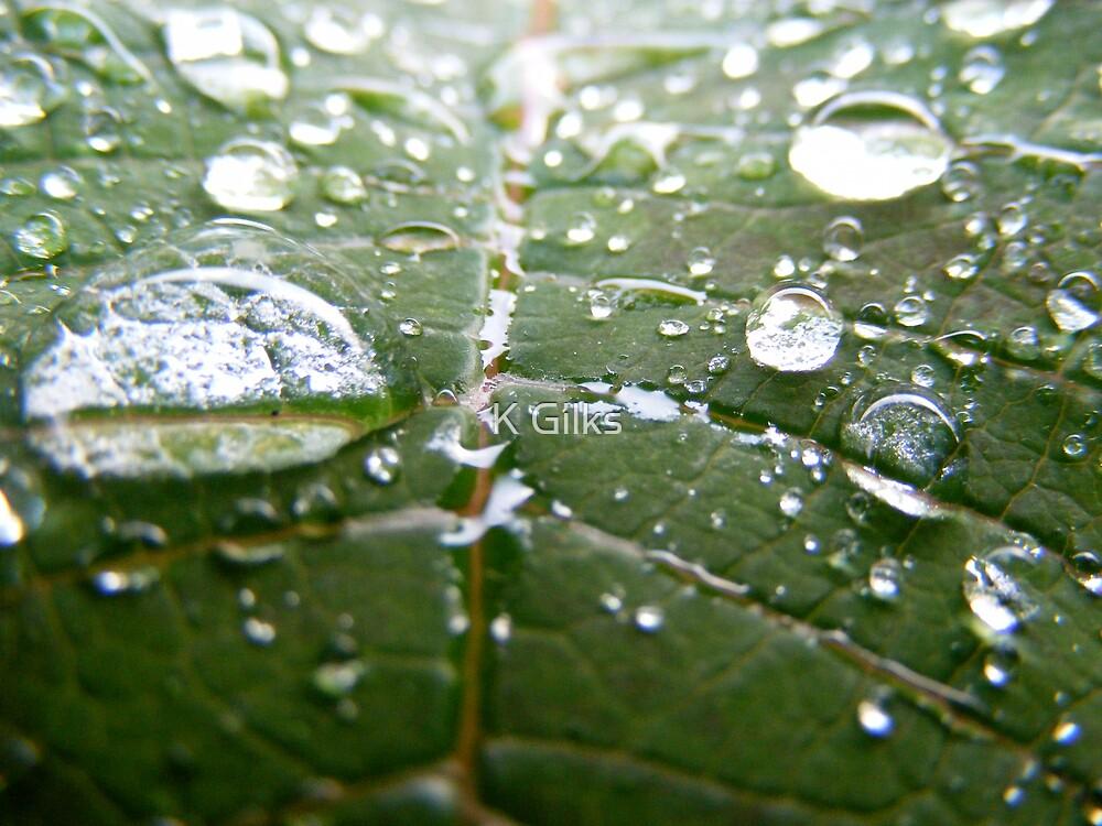 summer rain by K Gilks