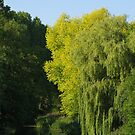 By The Banks Of The Avon, Reybridge, Wiltshire by lezvee