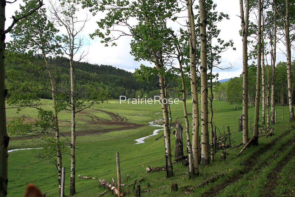 On The Trail by PrairieRose