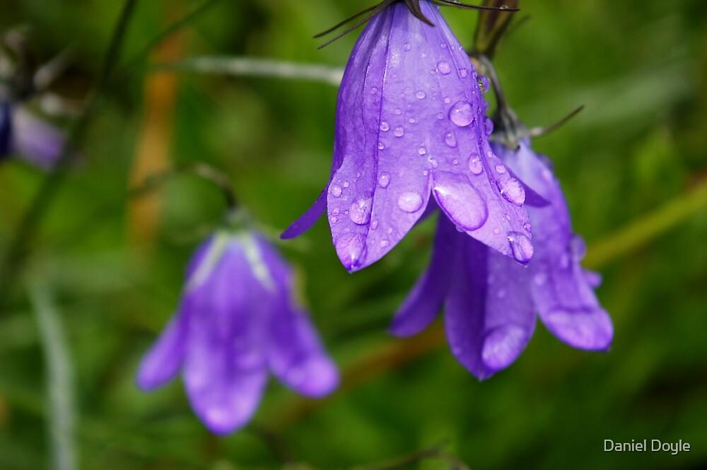 Blue Bell Droplets by Daniel Doyle