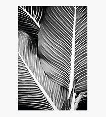 Tropical Leafs Fotodruck