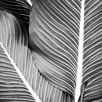 Tropical Leafs von froileinjuno
