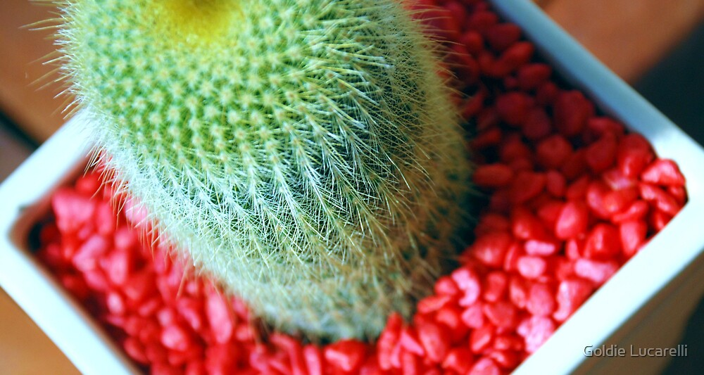 Cactus by Goldie Lucarelli