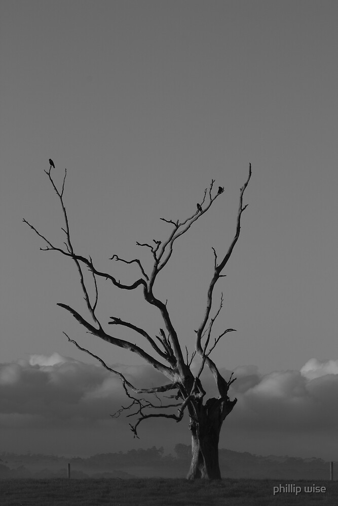 crow tree no 2 by phillip wise
