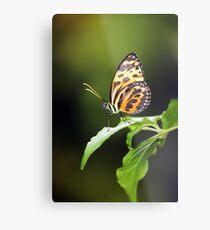 Harmonia Tiger Wing Metal Print