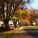 Golden Avenue by Wildpix