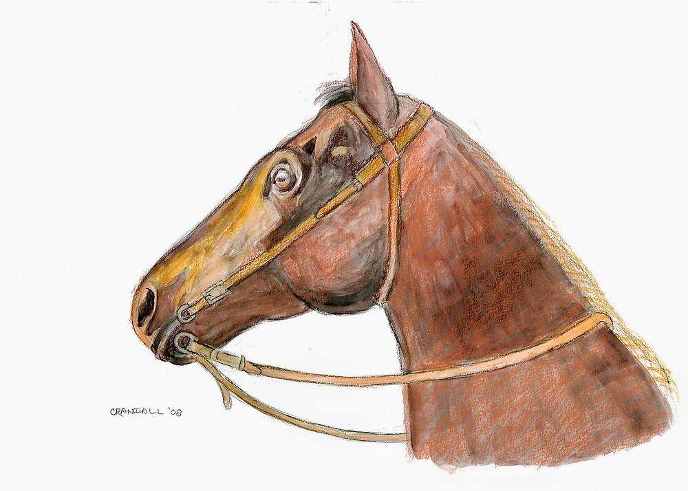 Equus by Gary  Crandall