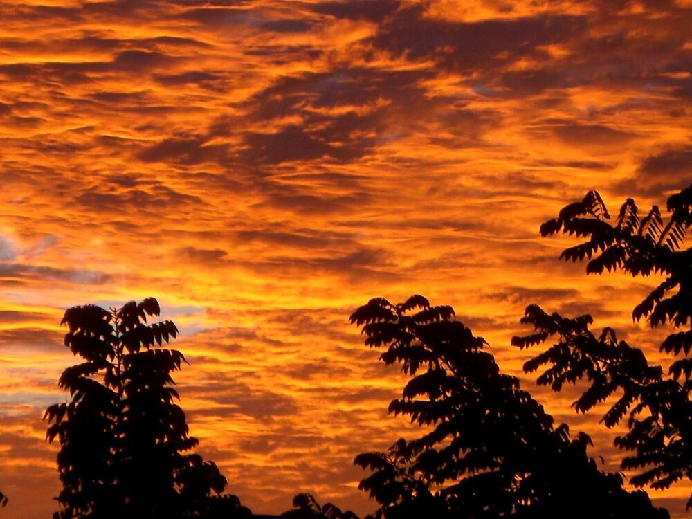 Golden Sunrise by estrada