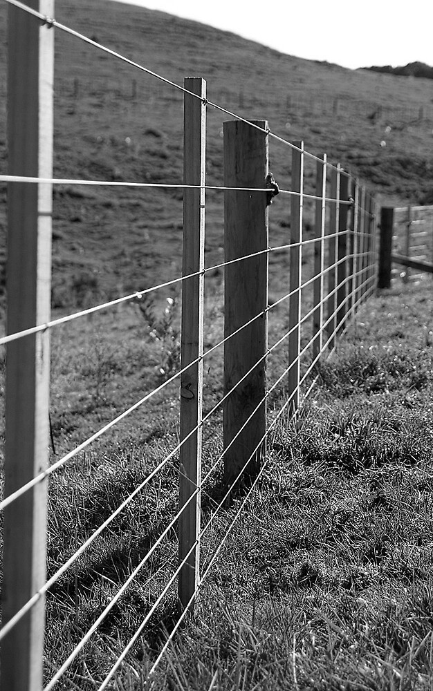 Fenced In by Chris Gin