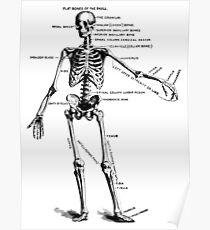 Human Skeleton Anatomy, Bone Names, Parts Poster