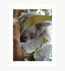 Cuddly Koala Art Print