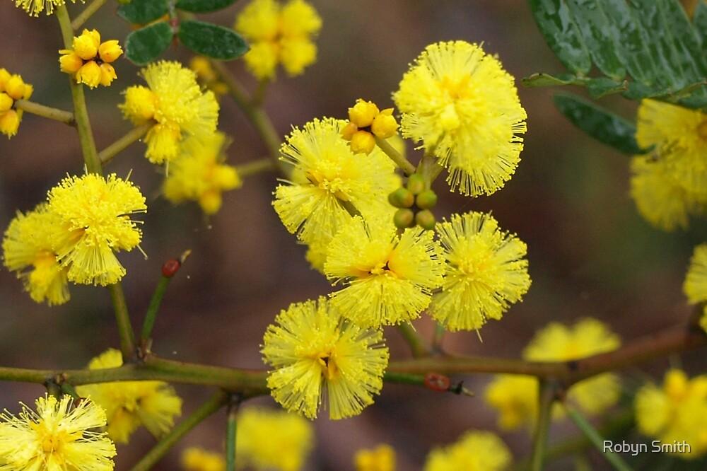 Golden Wattle by Robyn Smith