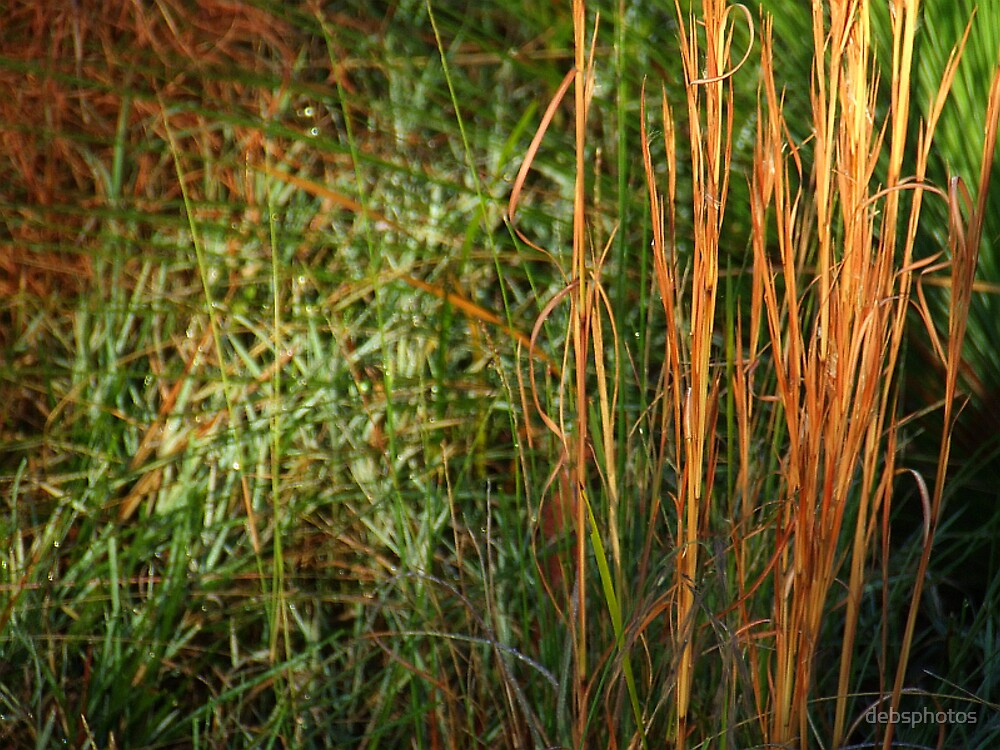 """""""Whiskey Grass"""".. by debsphotos"""