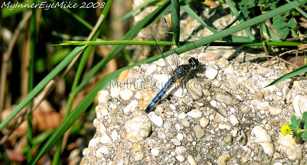 #388        Dragonfly In The Sun by MyInnereyeMike