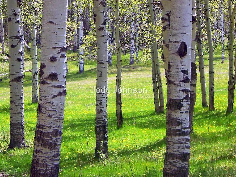 Aspen forest in Jasper Colorado by Jody Johnson