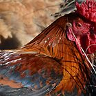The Rooster by lizdomett