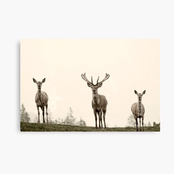 the animals Canvas Print