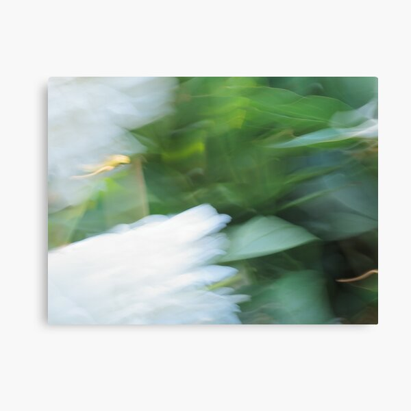 Abstract White Peonies Canvas Print
