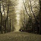 Sepia Walkway by Glen Allen