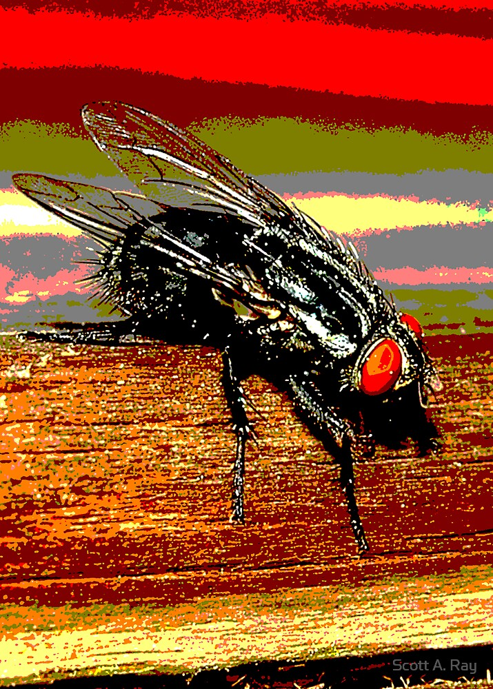 The Fly by Scott A. Ray