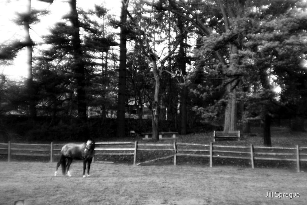 Holga's Horse by Jill Sprague