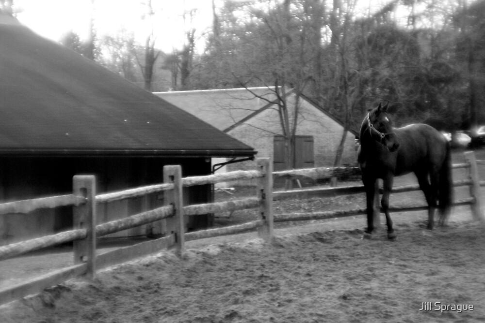 Holga's Horse II by Jill Sprague