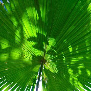 leaf in sun by demor44