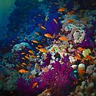 A REEF  'SEEN AS PRISTINE' by NICK COBURN PHILLIPS