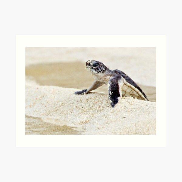 Baby green sea turtle Art Print