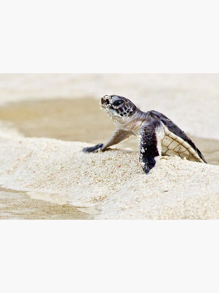 Baby green sea turtle by DavidWachenfeld