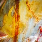 The Tree Bark Collection # 21 - The Magic Tree by Philip Johnson