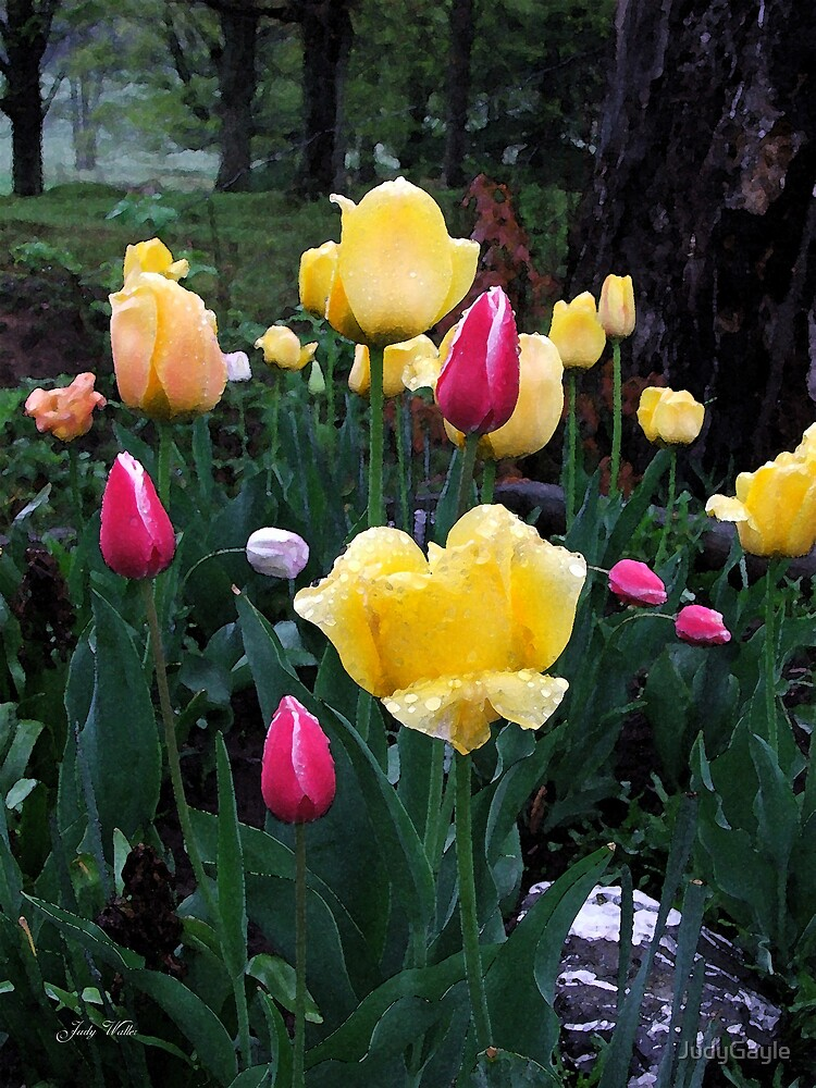 Bunch of Tulips by Judy Gayle Waller