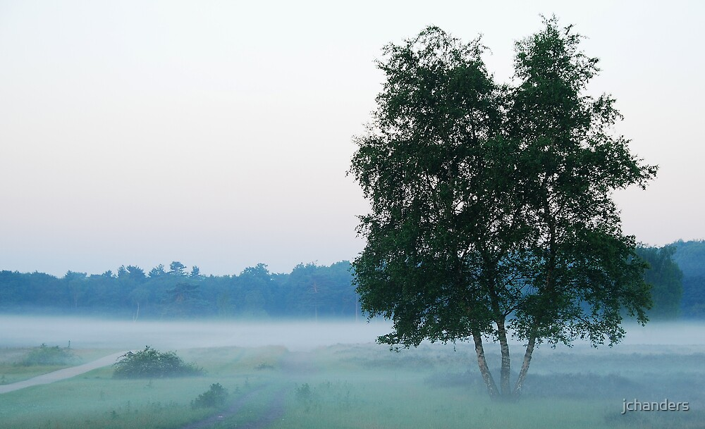 Floating in the morning mist by jchanders