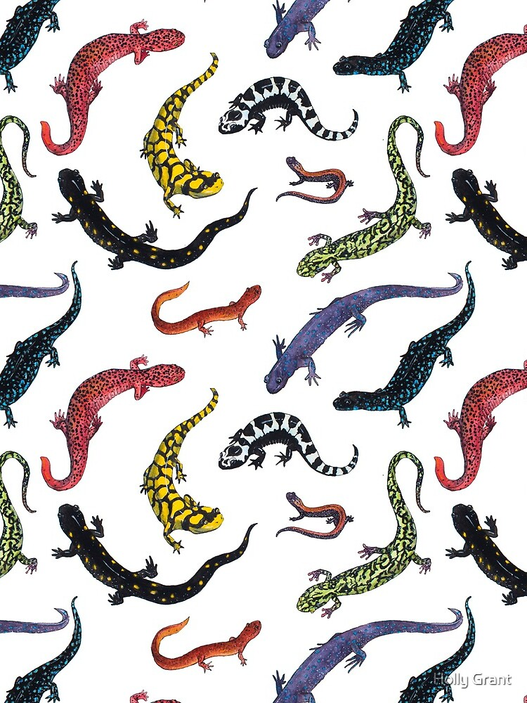Salamanders by LadyElizabeth