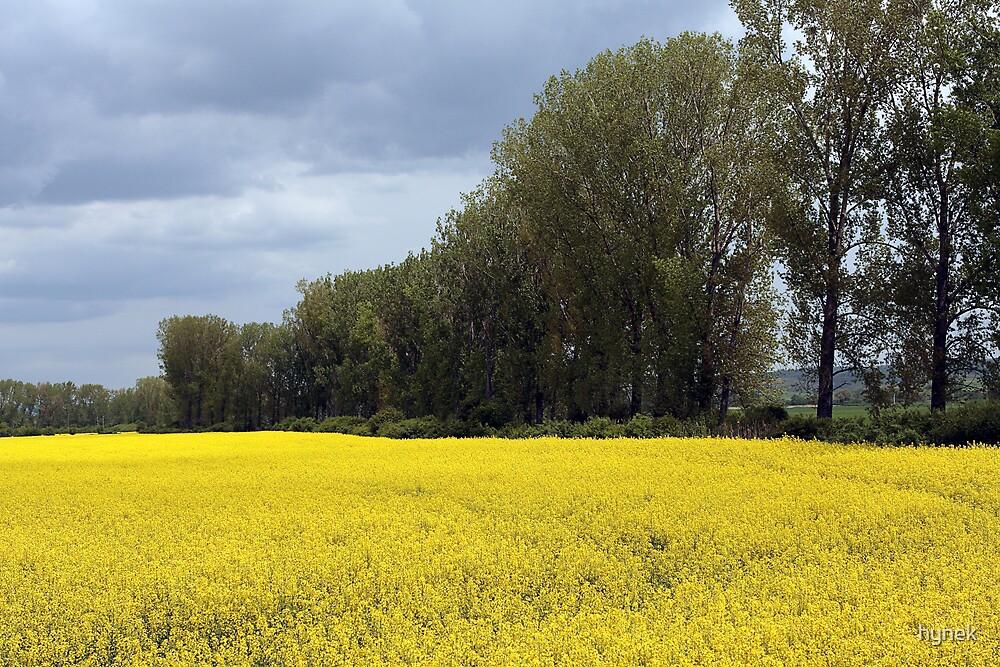 Yellow Sea #1 by hynek