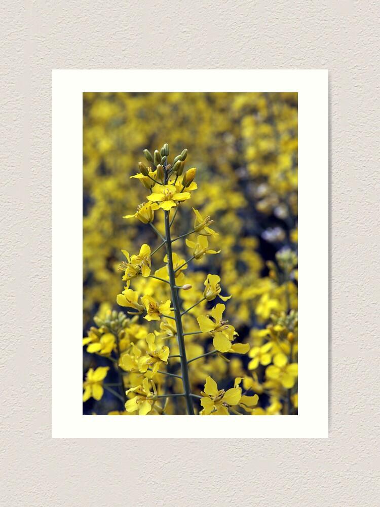 Alternate view of Yellow Sea #4 Art Print